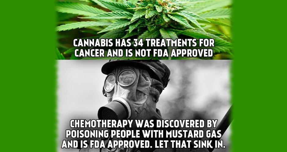 Medical Marijuana Saves Lives and Money